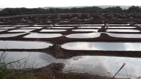 działka : construction of rice fields with chemical fertilizer. India, Goa. A lot of right-angled cards that are filled with water. Regular geometric objects, cellular construction Wideo