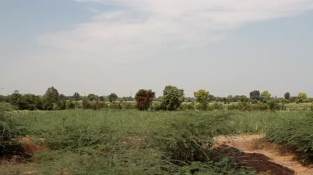 aridez : Yellow Savannah. Panorama dry thickets of bush, bush savanna, scrub jungle, thorn bushveld in India. Stock Footage