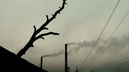 putrefaction : The concept of the death of the Earth. The silhouette of a dead inclined tree sticking out of the black soil, smoked huge pipes, wires stretch, gray sky. There is no wildlife