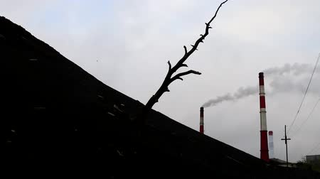 influence : The concept of the death of the Earth. The silhouette of a dead inclined tree sticking out of the black soil, smoked huge pipes, wires stretch, gray sky. There is no wildlife