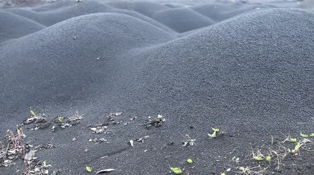 dark desolate : The black cold desert winter. Dunes of black sand, drought and dry weeds. Inhospitable environment