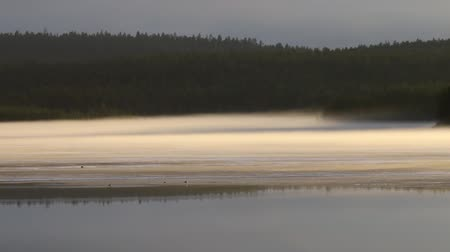 rozpouštění : Misty calm evening on forest lake is illuminated by colors of sunset, melting ice, reflection in water mirror. Black grouse Lek on ice, sit gulls and Loon. Spring in Arctic North. Scandinavia, Lapland