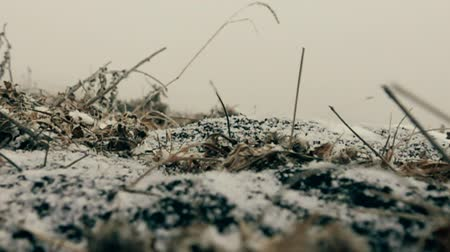 snow flurry : Beginning of winter. The first snow (early snow) falls on the autumn ground covered with dry herbs. The camera on the ground. Super slow motion 1000 fps