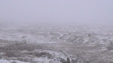 snow flurry : Beginning of wintertime, winter is in. The first snow (early snow) falls on autumn ground covered with dry herbs, snowfall on bleak hills, winter mood. Super slow motion 1000 fps