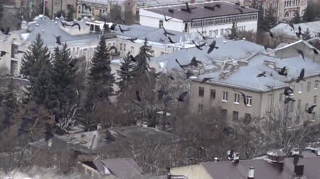 ладья : Fascinating picture. Large flock of black birds flying over the village, birds eye view. Splendor of bird flight in slow vision. Flock of rooks. Super slow motion 1000 fps