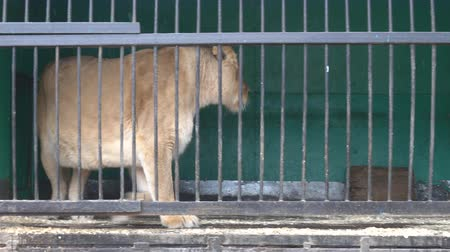bonds : Lions are not free in small cages with terrible conditions. Big wild cats behind bars