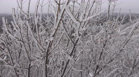 застекленный : Tree branch covered with ice, silver thaw. Natural disaster in form of ice rain came to southern region of Eastern Europe. Beautiful full-scale glaciation all around, be frozen in Стоковые видеозаписи