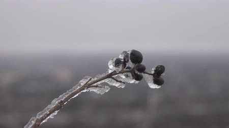 sincelo : Natural disaster in form of ice rain came to southern region of Eastern European part. Beautiful full-scale glaciation all around Stock Footage
