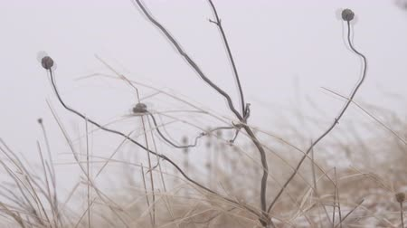 manto : Winter Prairie with dry vegetation, snow, fogg and frost