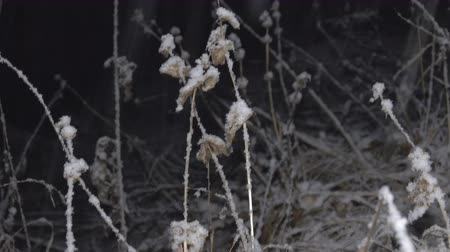 snow flurry : Night weather in the mountains, snowfall and dry Prairie plants closeup Stock Footage