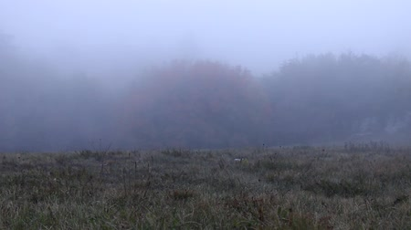 zanedbaný : This long fallow land (grass sward; neglected field) after the termination of agriculture, stagnation of rural economy. The edge of the forest and the fog