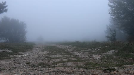 vago : An abandoned field road disappears in the fog. The dirt road is washed out by rain. wiring camera in a low position