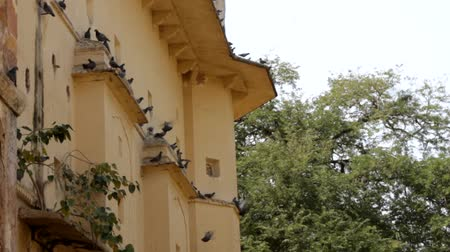 vrijstaand huis : Old colonial house in the Indian city and the pigeons in the eaves