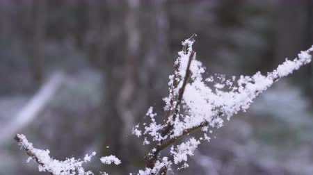 pókháló : The beauty of winter forest with snow in details. Thin threads of a web and beautiful snowflakes Stock mozgókép