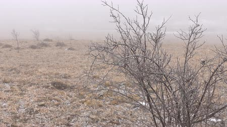 préri : Winter Prairie with dry vegetation, snow, fog and frost