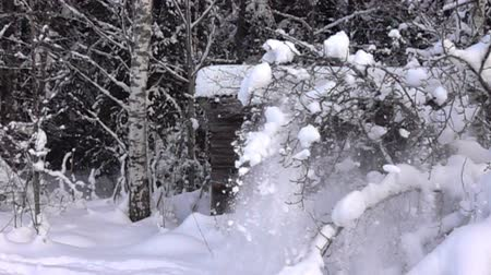snowbreak : snow-covered trees and falling snow caps on snowbreak day near the forest hut. Super slow motion 1000 fps