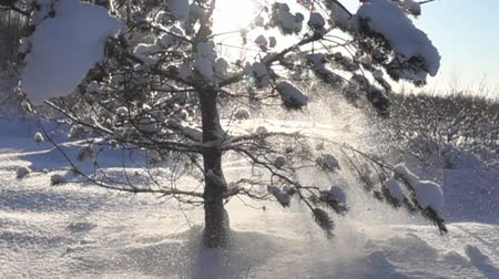 snowbreak : snow-covered trees and falling snow caps on snowbreak day near the forest hut. Super slow motion 1000 fps, in contour Stock Footage