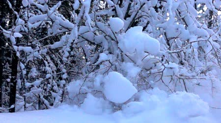 wood glade : snow-covered Bush and falling snow caps on snowbreak day near the forest hut. Super slow motion 1000 fps, in contour Stock Footage