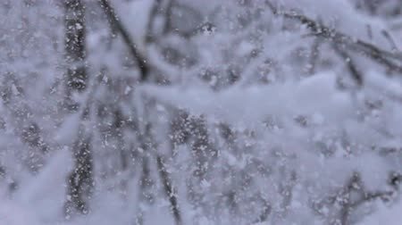 snowbreak : Colorful winter forest, moment when branch sags under weight of snow. Super slow motion 1000 fps