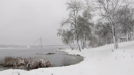 cattail : View of the Dnieper river during a cold and snowy winter day. The sky is covered by clouds and snow flakes fall softly on the trees and on the ground Stock Footage