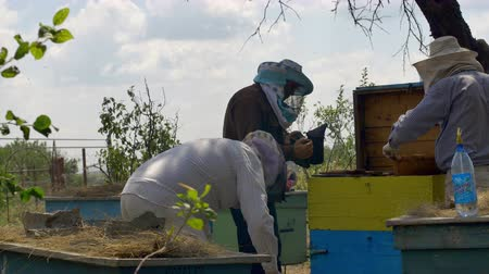 apiary : Three beekeepers are checking of all details in their beehive