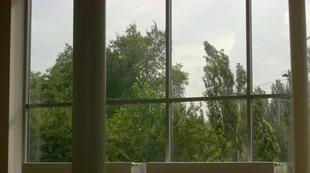 windup : 4K timeslapse view from window of the poplar swinging in the wind Stock Footage