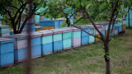 markiza : HD Close up view of beehives view from back