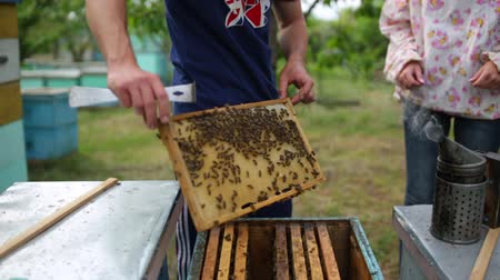 worker bees : HD Beekeepers takes out a frame of honeycomb out of beehouse
