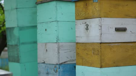 worker bees : HD General plan on the beehouses stannding one on the other going from up to down