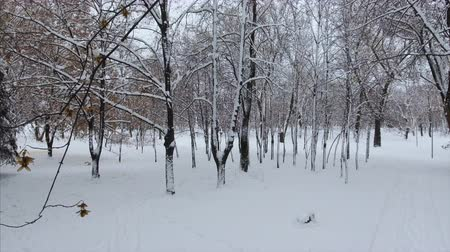 oblouk : 4K Panoramic crone shot of the winter park at the low altitude. The tree corridor