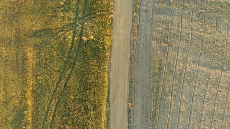 Aerial top-down view of the plowed field during sunset Stok Video