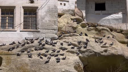 anatolia : HD footage. Doves on the rocks in city in the rocks. Slow motion
