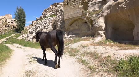 török : HD footage. Horse in the city in the rocks. Slow motion Stock mozgókép