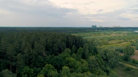 klíring : 4K aerial drone footage flyover deciduous forest