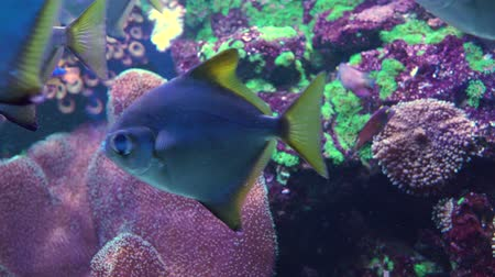 barreira : Colorful tropical coral reef. Underwater fishes and corals