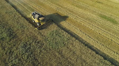 otruby : Aerial drone footage. Combine Harvester gathers the wheat. Harvesting grain field. Beautiful natural aerial landscape. Food industry concept.