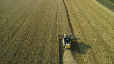 korpa : Aerial drone footage. Following Combine Harvester gathers the wheat. Harvesting grain field. Beautiful natural aerial landscape. Food industry concept. Stock mozgókép