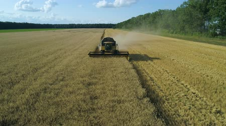 otruby : Aerial drone footage. Front view Combine Harvester gathers the wheat. Harvesting grain field. Beautiful natural aerial landscape. Food industry concept. Dostupné videozáznamy
