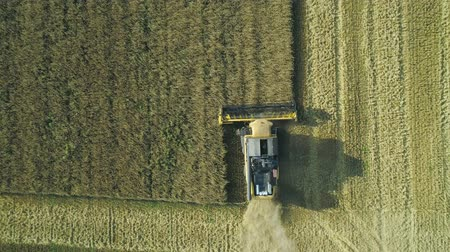 otruby : Aerial drone footage. Top view Combine Harvester gathers the wheat. Harvesting grain field. Beautiful natural aerial landscape. Food industry concept.