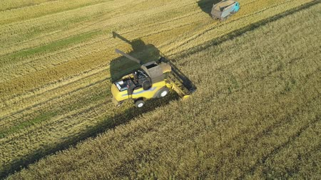 kepek : Aerial drone footage. Combine Harvester loading track on field. Stok Video