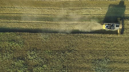 otruby : Aerial drone footage. Top view still shot of Combine Harvester gathers the wheat. Harvesting grain field. Beautiful natural aerial landscape. Food industry concept. Dostupné videozáznamy