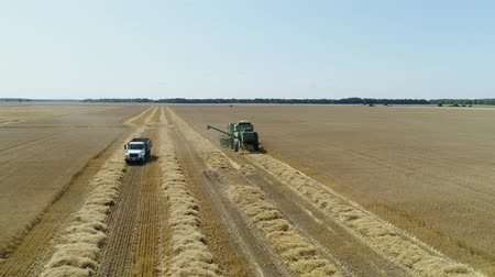 korpa : Aerial drone footage. Truck approaches a combine harvestaer for loading Stock mozgókép
