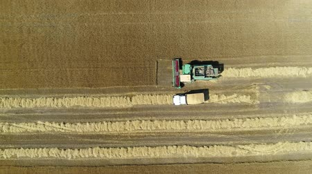 otruby : Aerial drone footage. Truck leaves the harvester after loading. Top view Dostupné videozáznamy
