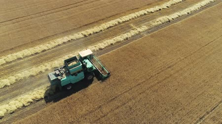 kepek : Aerial drone footage. Combine Harvester gathers the wheat. Harvesting grain field.
