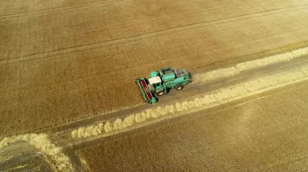 otruby : Aerial drone footage. Combine Harvester gathers the wheat. Harvesting grain field.