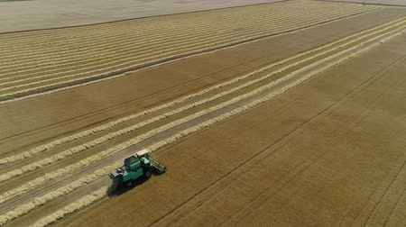 korpa : Aerial drone footage. Combine Harvester gathers the wheat. Harvesting grain field.