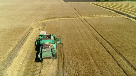 agronomia : Aerial drone footage. Following Combine Harvester gathers the wheat. Harvesting grain field. Filmati Stock