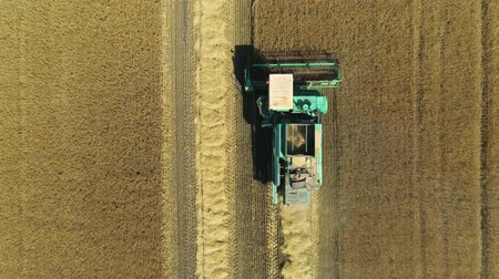 otruby : Aerial drone footage. Top view Combine Harvester gathers the wheat. Harvesting grain field. Beautiful natural aerial landscape.