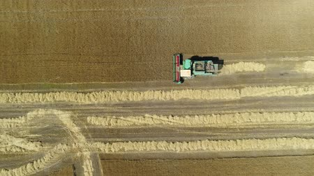 korpa : Aerial drone footage. Top view Combine Harvester gathers the wheat. Harvesting grain field. Beautiful natural aerial landscape.