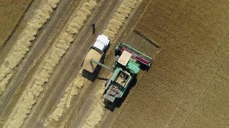 sierpien : Aerial drone footage. Harvester spills grain into a truck. Top view Wideo